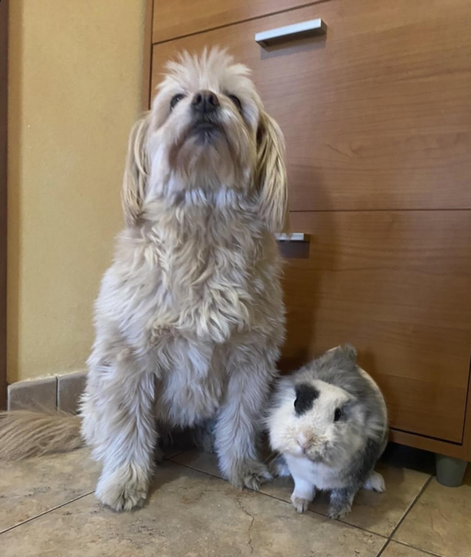 Convivenza tra cani e altri animali