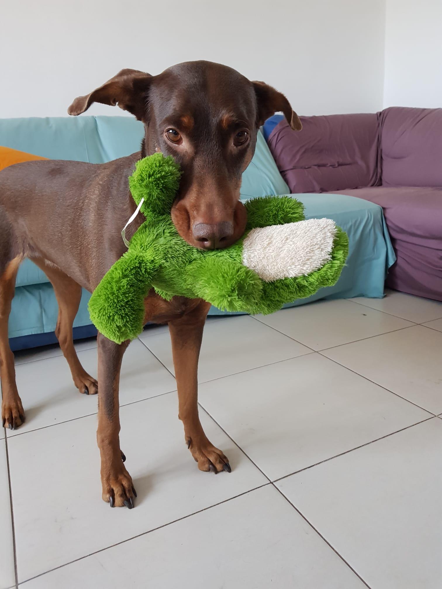 I bisogni del cane